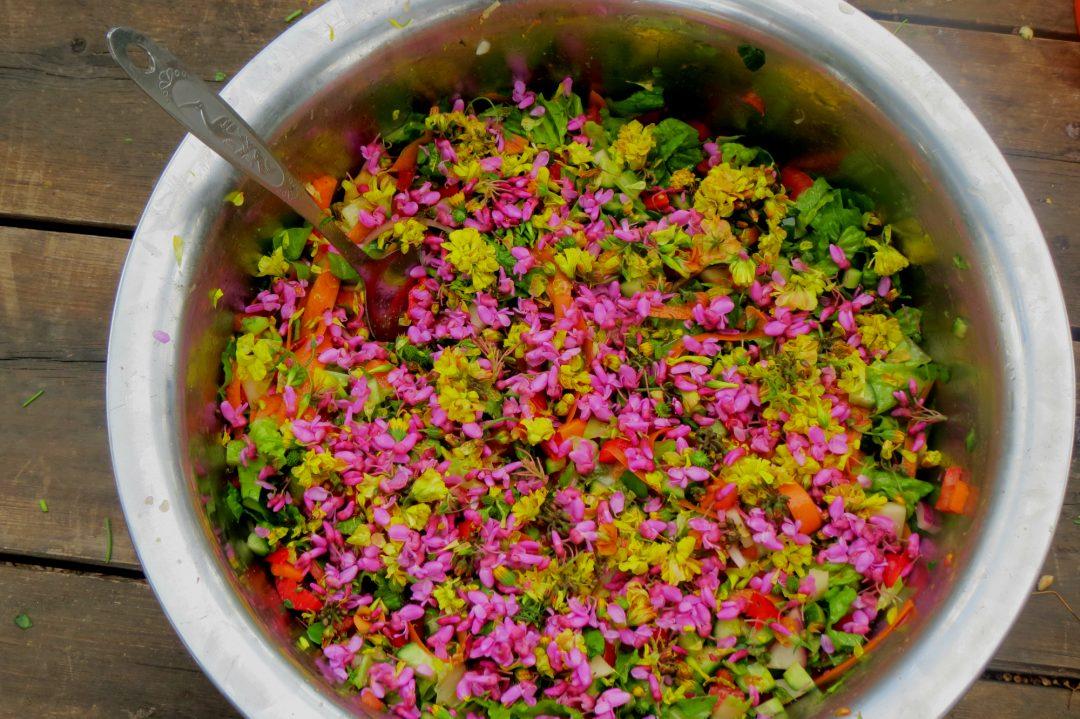 מזון מלוקט צבעוני וחי - שפע מהטבע