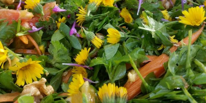 קורס פשוט ליקוט - לימוד לעומק על צמחי בר אכילים בקבוצה קטנה עם יחס אישי
