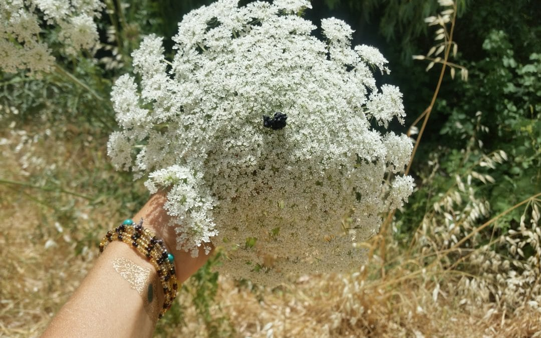 איך לזהות גזר בר ולמי כדאי להיזהר ממנו?